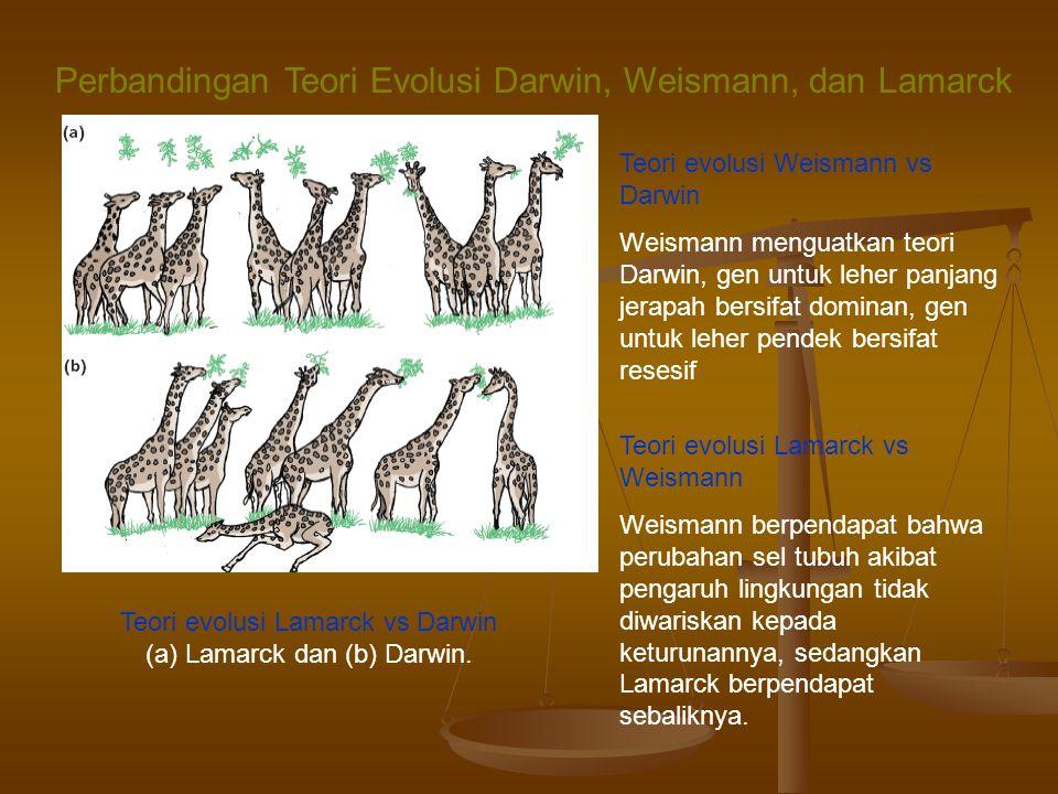 Perbandingan Teori Evolusi Darwin, Weismann, dan Lamarck Teori evolusi Lamarck vs Darwin (a) Lamarck dan (b) Darwin.