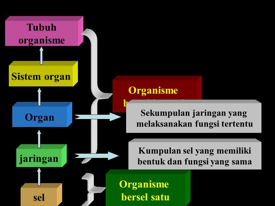 sel jaringan Organ Sistem organ Tubuh organisme Organisme bersel banyak Organisme bersel satu Kumpulan sel yang memiliki bentuk dan fungsi yang sama S