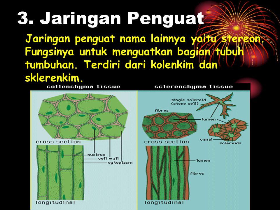 3. Jaringan Penguat Jaringan penguat nama lainnya yaitu stereon. Fungsinya untuk menguatkan bagian tubuh tumbuhan. Terdiri dari kolenkim dan sklerenki