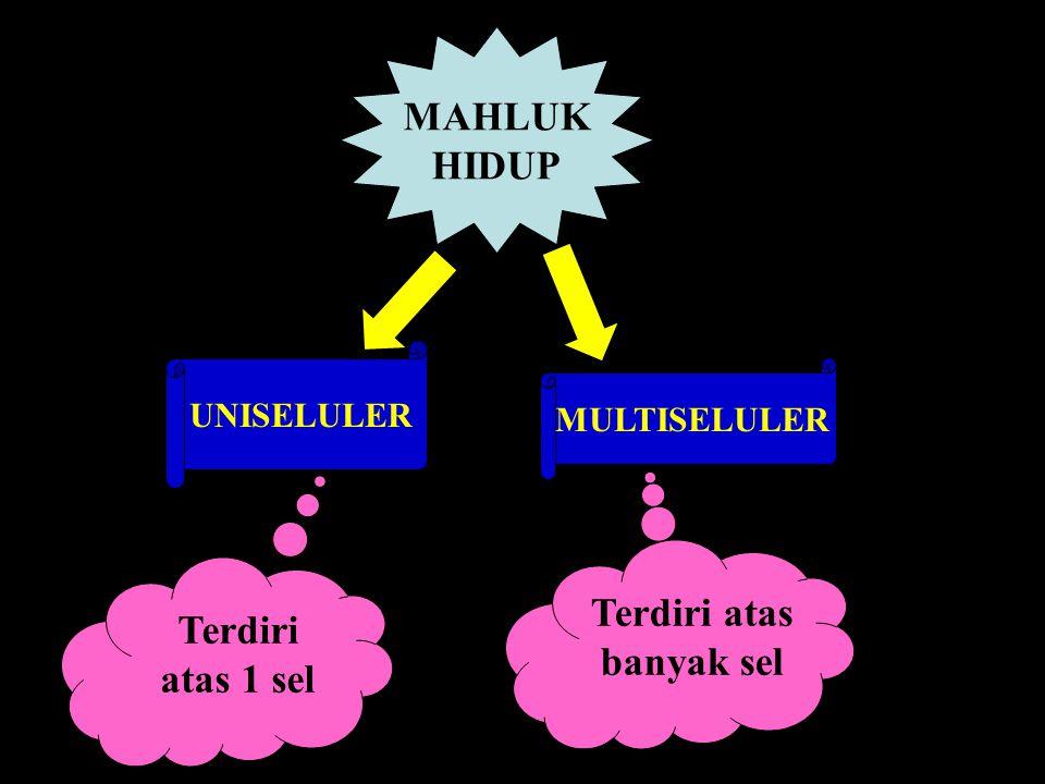 3.Jaringan Penguat Jaringan penguat nama lainnya yaitu stereon.