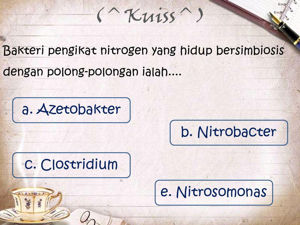 (^Kuiss^) Bakteri pengikat nitrogen yang hidup bersimbiosis dengan polong-polongan ialah.... a. Azetobakter c. Clostridium b. Nitrobacter e. Nitrosomo