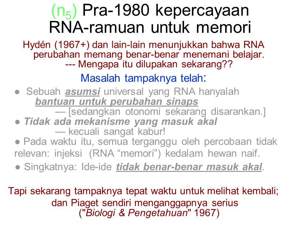 (n 5 ) Pra-1980 kepercayaan RNA-ramuan untuk memori Hydén (1967+) dan lain-lain menunjukkan bahwa RNA perubahan memang benar-benar menemani belajar.