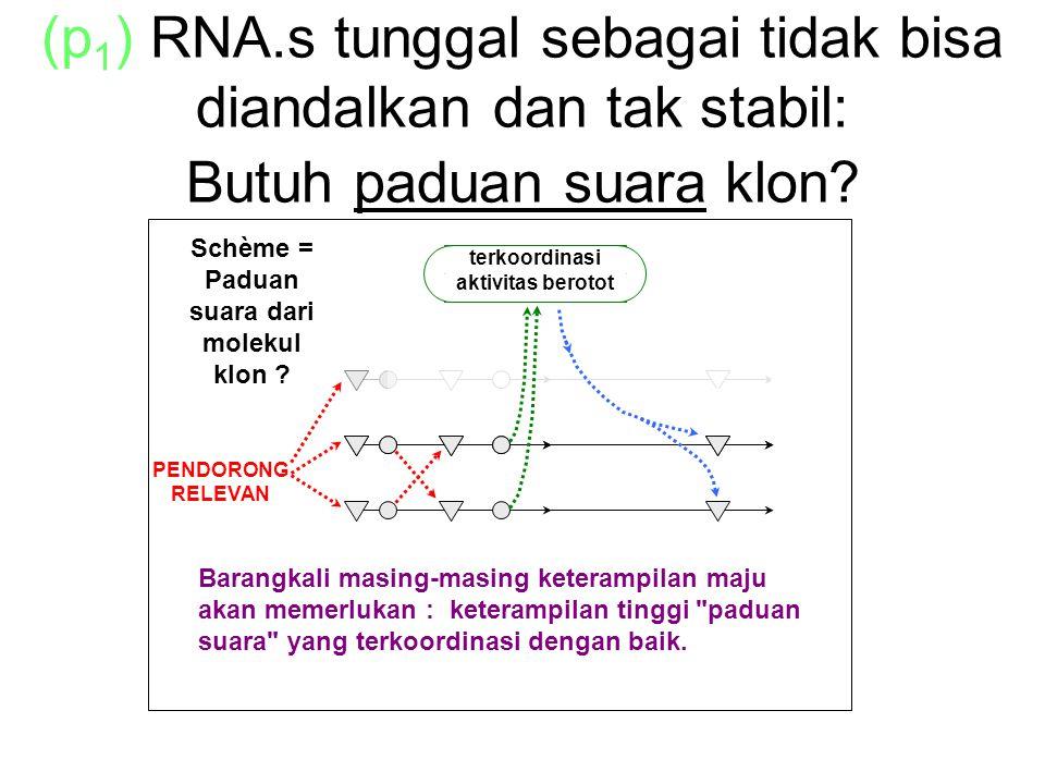 (p 1 ) RNA.s tunggal sebagai tidak bisa diandalkan dan tak stabil: Butuh paduan suara klon.