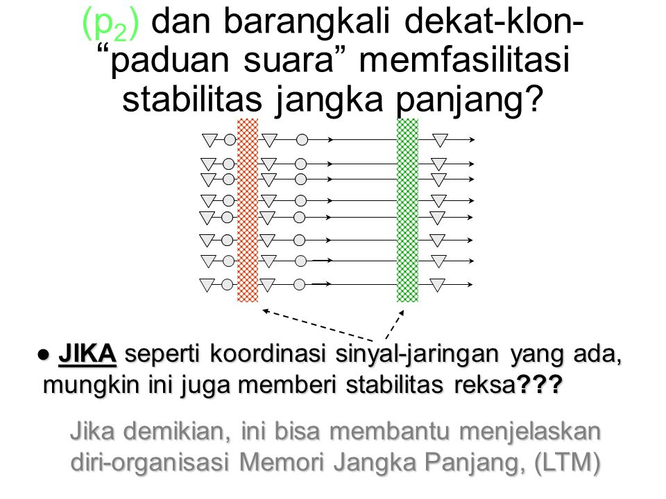 (p 2 ) dan barangkali dekat-klon- paduan suara memfasilitasi stabilitas jangka panjang.