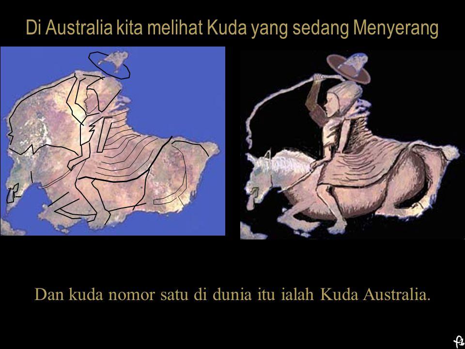 Di Australia kita melihat Kuda yang sedang Menyerang Dan kuda nomor satu di dunia itu ialah Kuda Australia.
