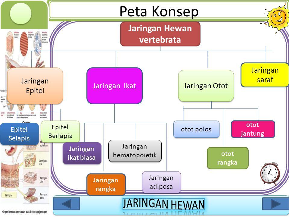 Peta Konsep Jaringan Hewan vertebrata Jaringan Epitel Jaringan Epitel Jaringan Ikat Jaringan Otot Jaringan saraf Epitel Selapis Epitel Selapis Epitel