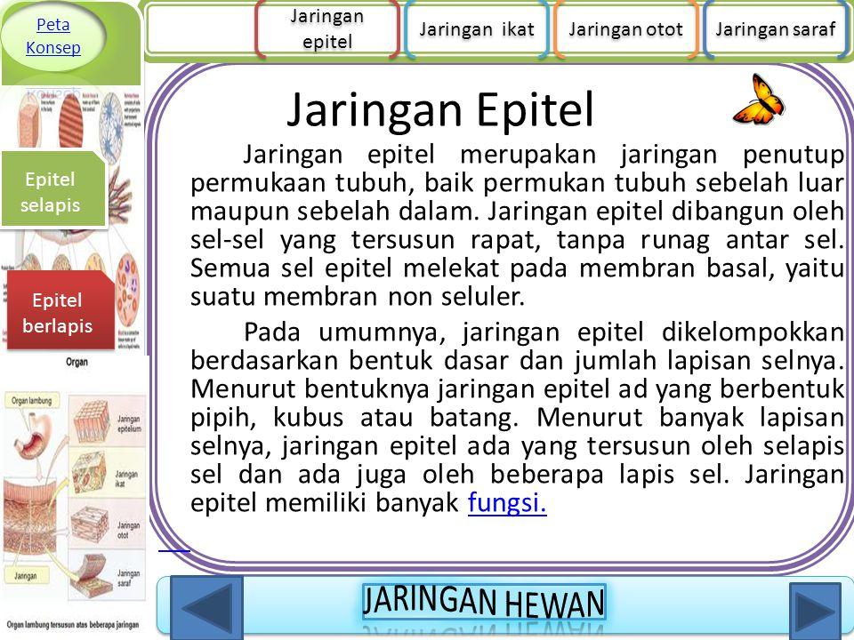 Jaringan Epitel Jaringan epitel merupakan jaringan penutup permukaan tubuh, baik permukan tubuh sebelah luar maupun sebelah dalam. Jaringan epitel dib