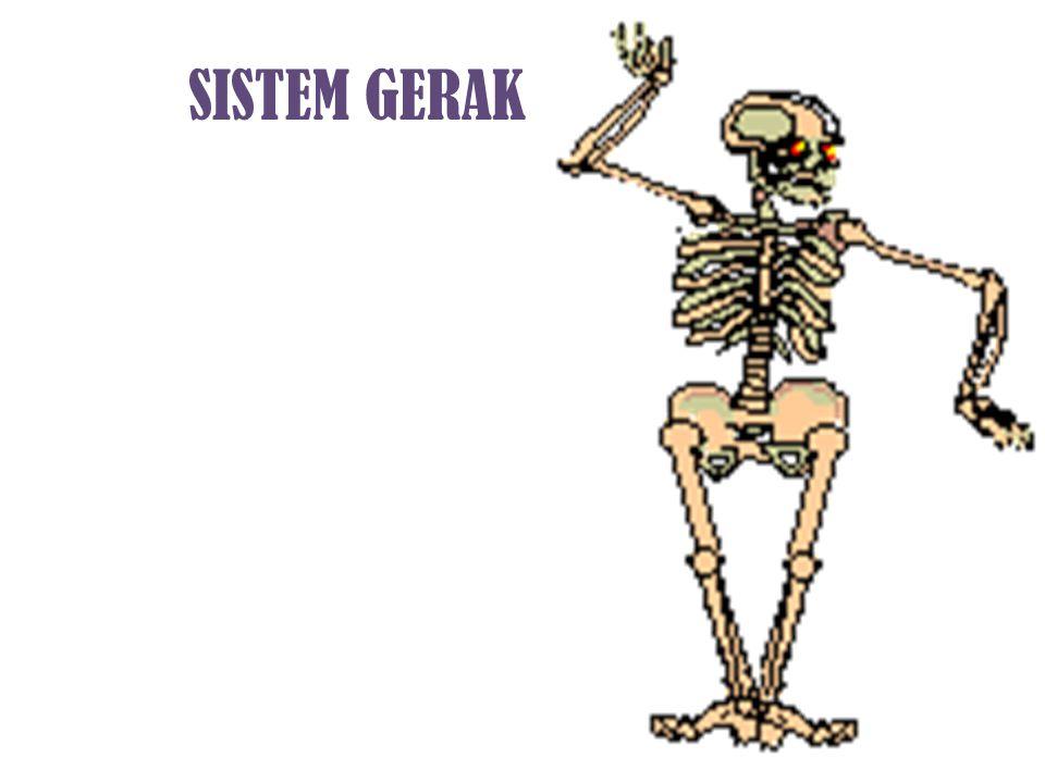 Tujuan Siswa mampu menjelaskan perkembangan tulang.