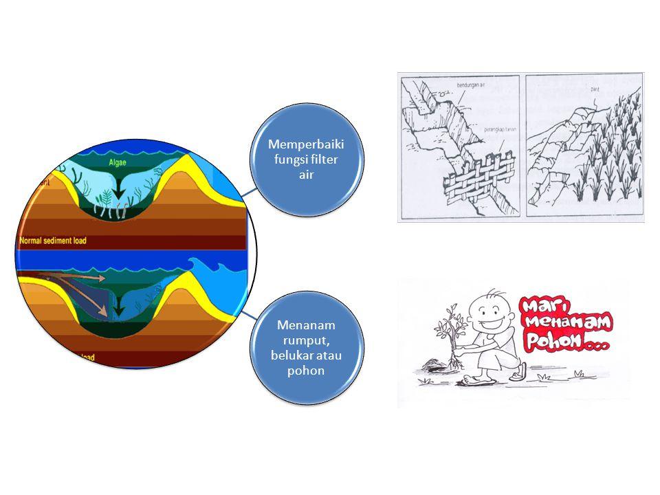 Memperbaiki fungsi filter air Menanam rumput, belukar atau pohon