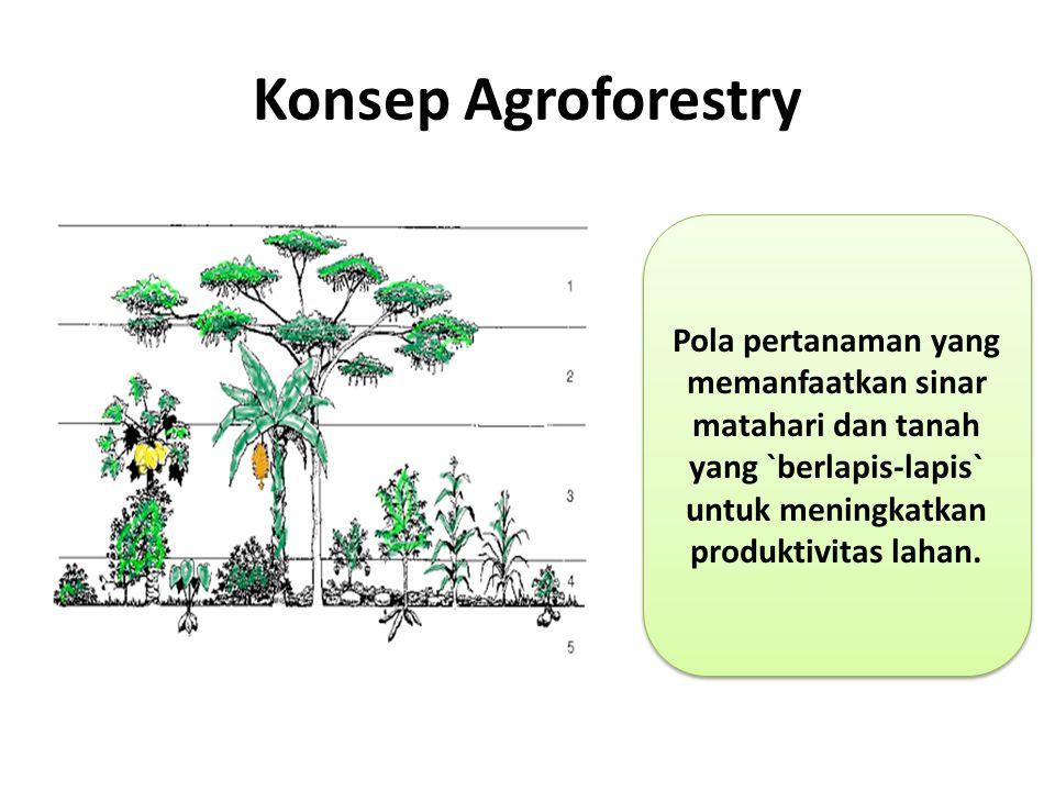 Konsep Agroforestry Pola pertanaman yang memanfaatkan sinar matahari dan tanah yang `berlapis-lapis` untuk meningkatkan produktivitas lahan.
