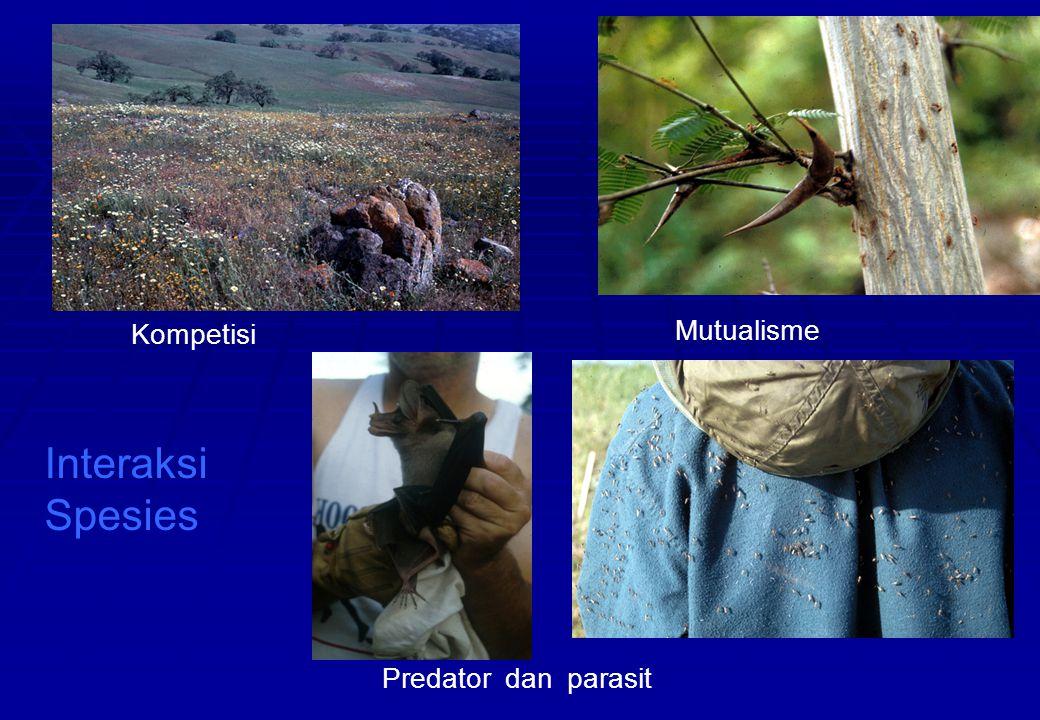 Mutualisme Predator dan parasit Kompetisi Interaksi Spesies