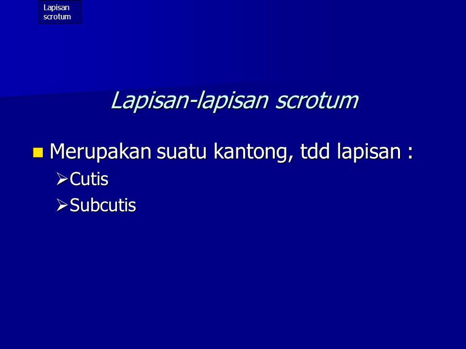 Lapisan pembungkus testis (luar-dalam): Lapisan pembungkus testis (luar-dalam):  Scrotum -Integumen -Tunica dartos  Lapisan2 funiculus spermaticus : -Fascia spermatica ext.