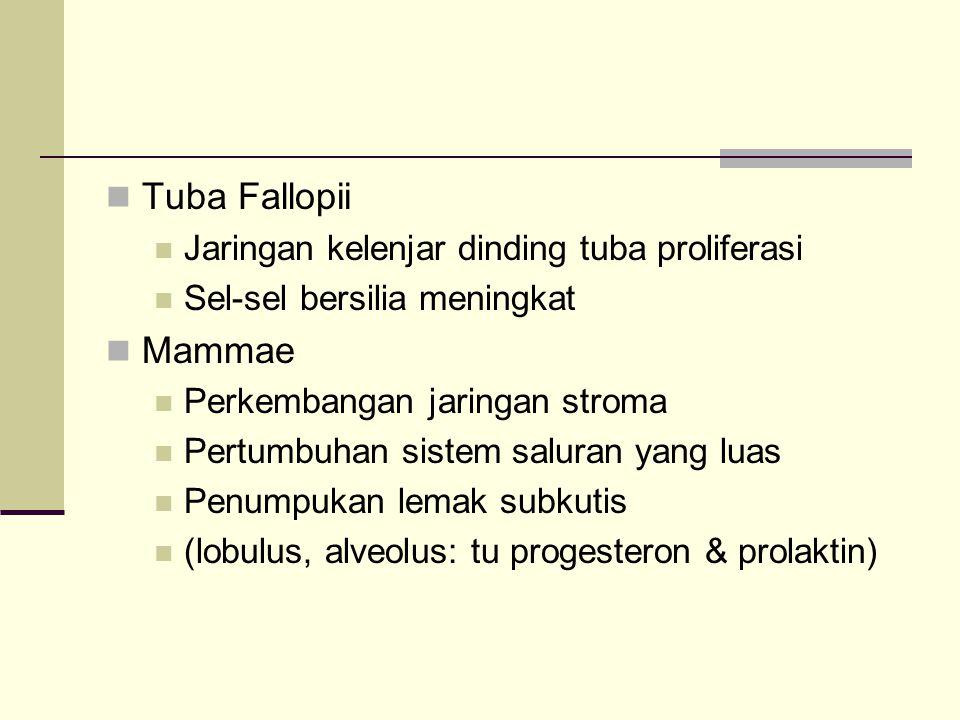 Tuba Fallopii Jaringan kelenjar dinding tuba proliferasi Sel-sel bersilia meningkat Mammae Perkembangan jaringan stroma Pertumbuhan sistem saluran yan