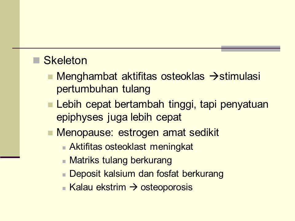 Skeleton Menghambat aktifitas osteoklas  stimulasi pertumbuhan tulang Lebih cepat bertambah tinggi, tapi penyatuan epiphyses juga lebih cepat Menopau