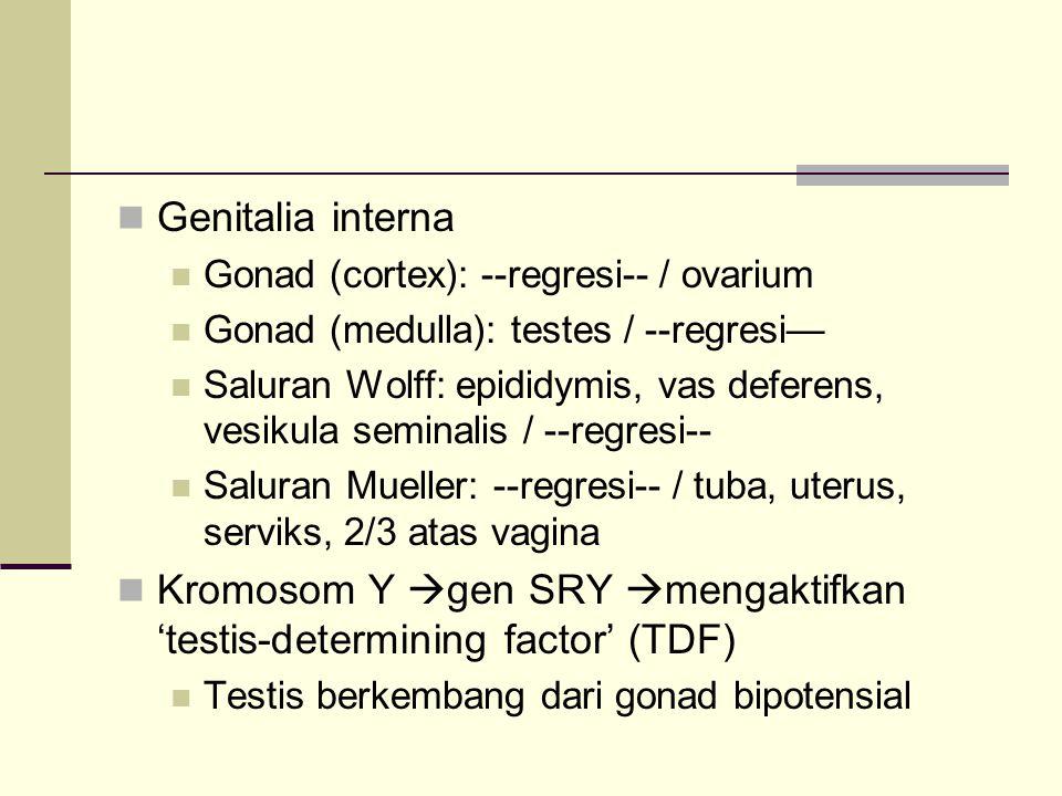 Genitalia interna Gonad (cortex): --regresi-- / ovarium Gonad (medulla): testes / --regresi— Saluran Wolff: epididymis, vas deferens, vesikula seminal