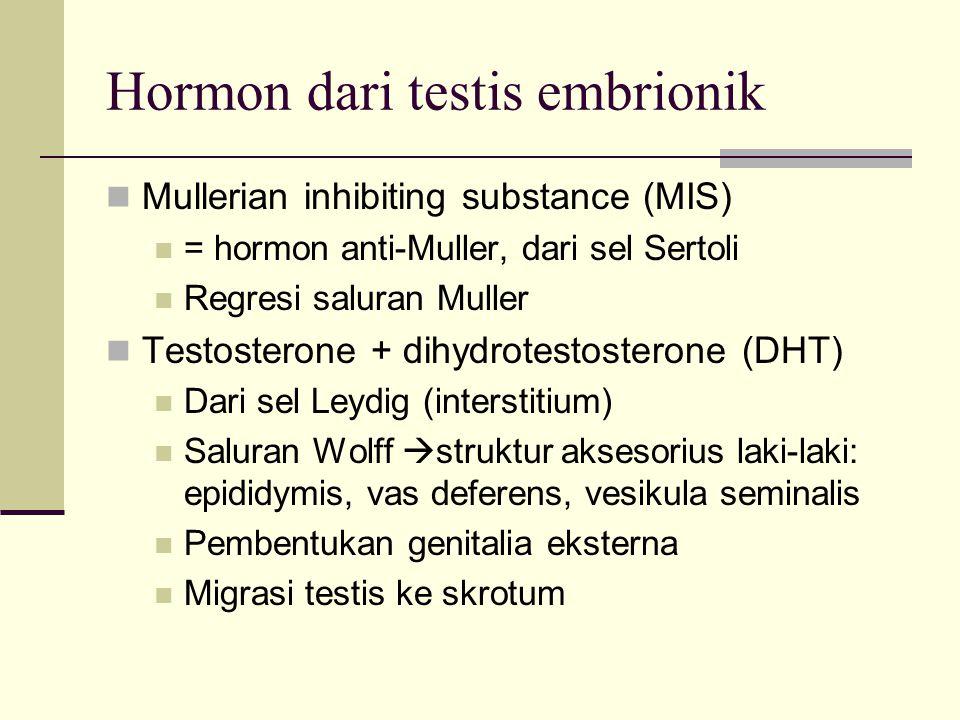 Hormon dari testis embrionik Mullerian inhibiting substance (MIS) = hormon anti-Muller, dari sel Sertoli Regresi saluran Muller Testosterone + dihydro