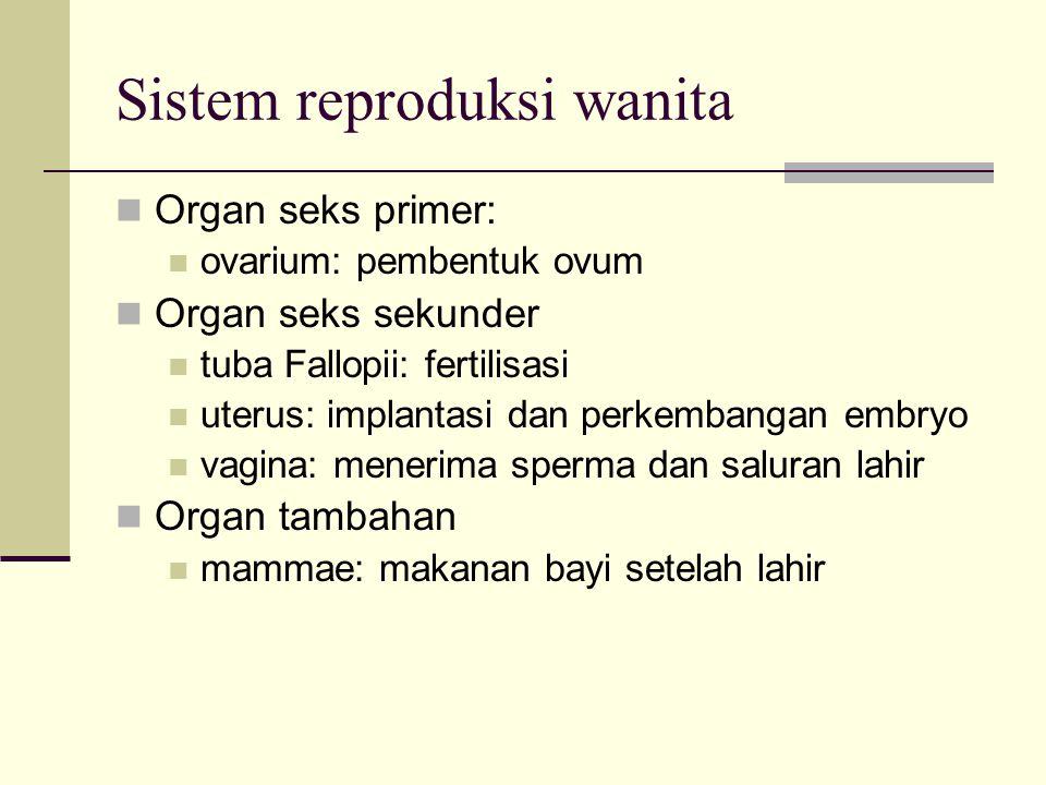 Sistem reproduksi wanita Organ seks primer: ovarium: pembentuk ovum Organ seks sekunder tuba Fallopii: fertilisasi uterus: implantasi dan perkembangan