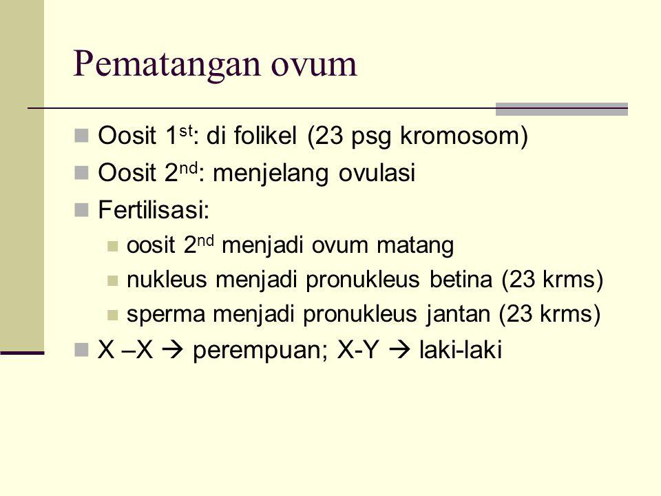 Pematangan ovum Oosit 1 st : di folikel (23 psg kromosom) Oosit 2 nd : menjelang ovulasi Fertilisasi: oosit 2 nd menjadi ovum matang nukleus menjadi p