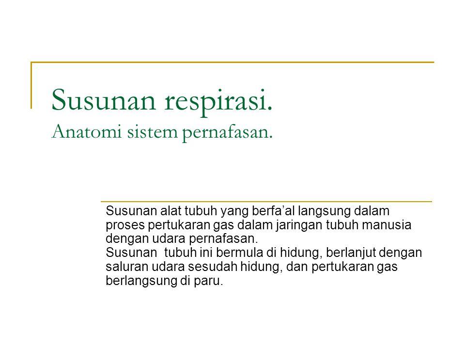 Susunan respirasi. Anatomi sistem pernafasan. Susunan alat tubuh yang berfa'al langsung dalam proses pertukaran gas dalam jaringan tubuh manusia denga