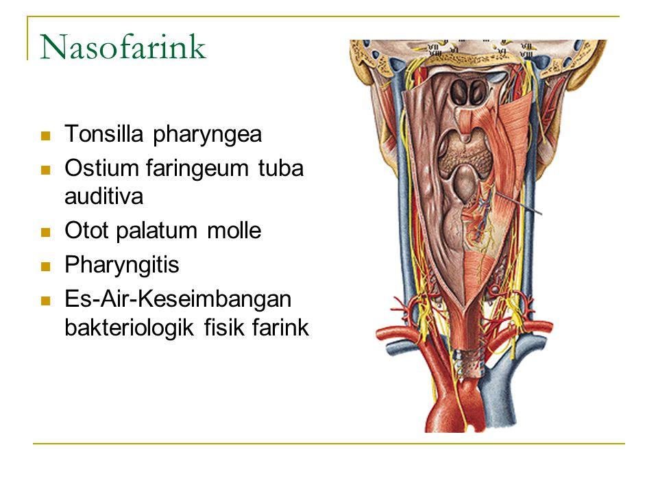 Nasofarink Tonsilla pharyngea Ostium faringeum tuba auditiva Otot palatum molle Pharyngitis Es-Air-Keseimbangan bakteriologik fisik farink