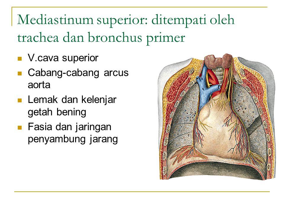 Mediastinum superior: ditempati oleh trachea dan bronchus primer V.cava superior Cabang-cabang arcus aorta Lemak dan kelenjar getah bening Fasia dan j