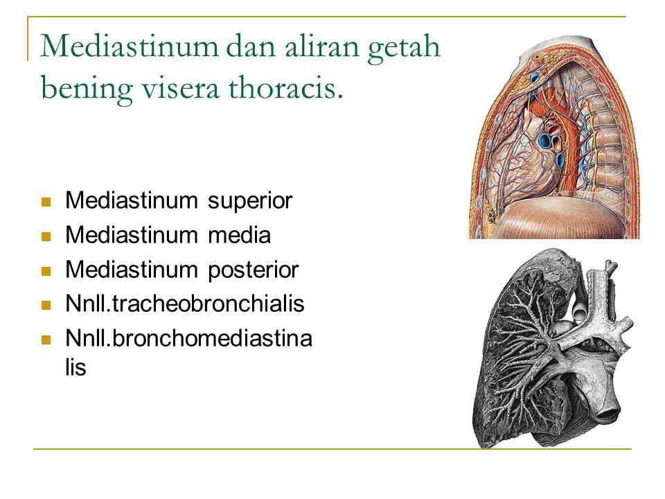 Mediastinum dan aliran getah bening visera thoracis. Mediastinum superior Mediastinum media Mediastinum posterior Nnll.tracheobronchialis Nnll.broncho