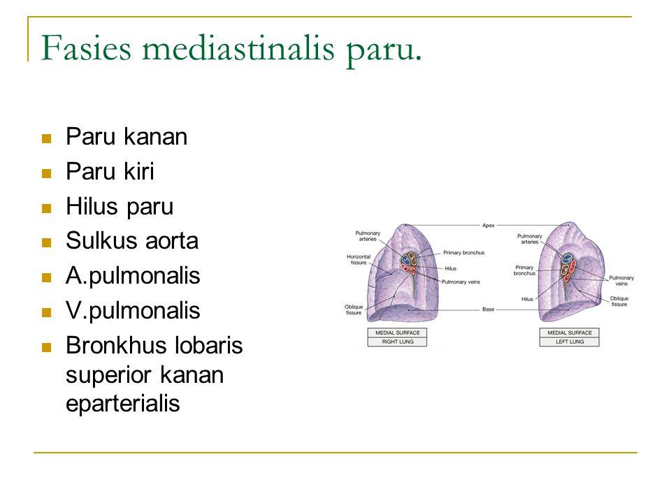 Fasies mediastinalis paru. Paru kanan Paru kiri Hilus paru Sulkus aorta A.pulmonalis V.pulmonalis Bronkhus lobaris superior kanan eparterialis