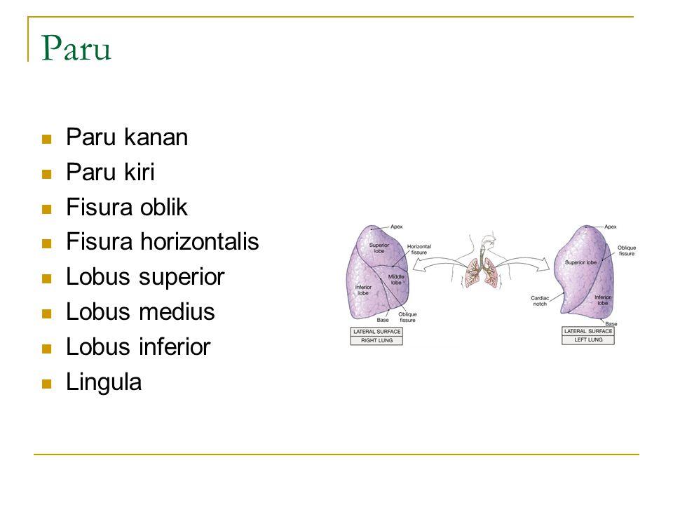 Paru Paru kanan Paru kiri Fisura oblik Fisura horizontalis Lobus superior Lobus medius Lobus inferior Lingula