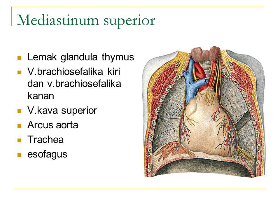 Mediastinum superior Lemak glandula thymus V.brachiosefalika kiri dan v.brachiosefalika kanan V.kava superior Arcus aorta Trachea esofagus