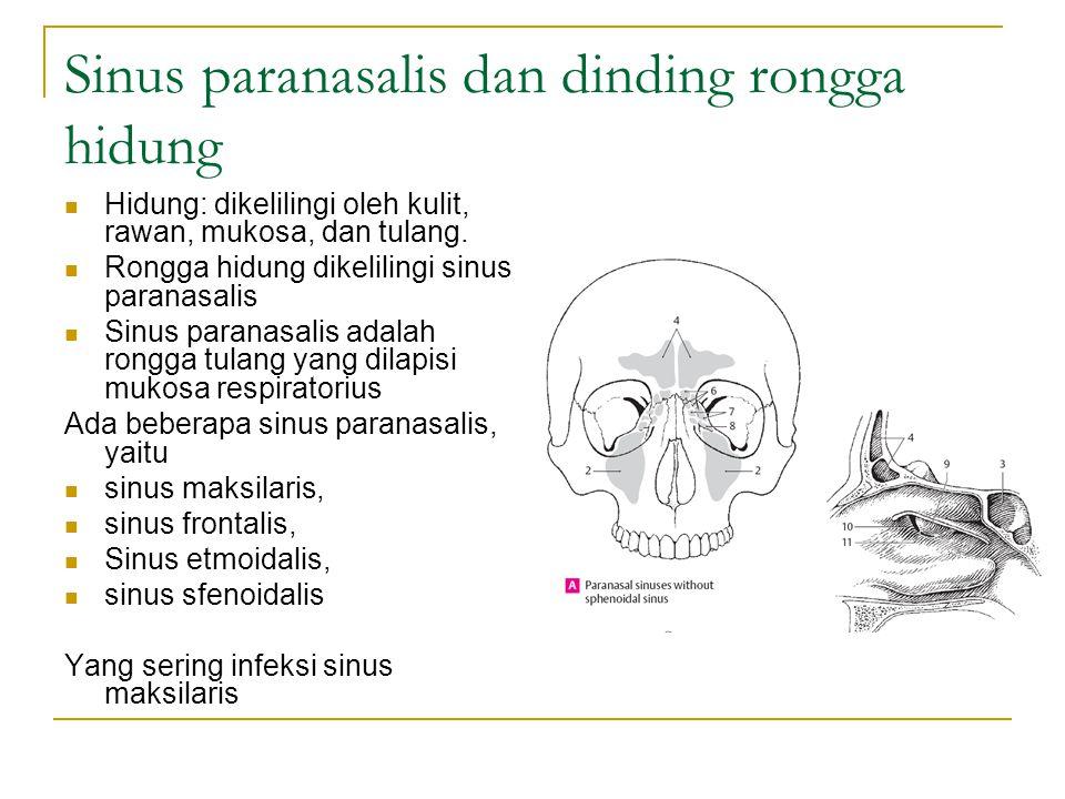 Sinus paranasalis dan dinding rongga hidung Hidung: dikelilingi oleh kulit, rawan, mukosa, dan tulang. Rongga hidung dikelilingi sinus paranasalis Sin
