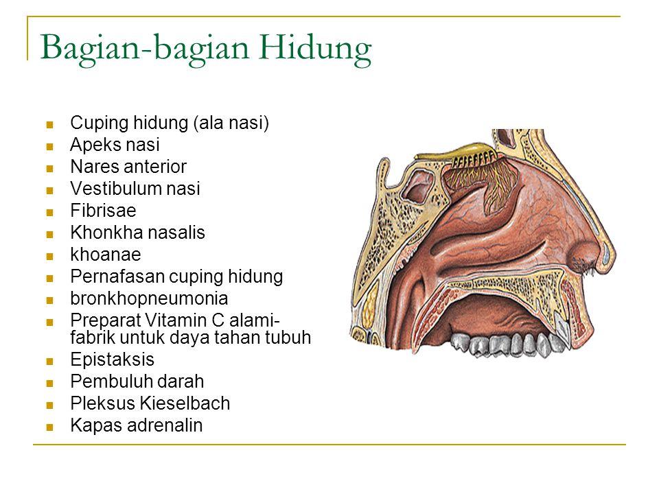 Bagian-bagian Hidung Cuping hidung (ala nasi) Apeks nasi Nares anterior Vestibulum nasi Fibrisae Khonkha nasalis khoanae Pernafasan cuping hidung bron