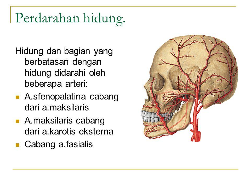 Perdarahan hidung. Hidung dan bagian yang berbatasan dengan hidung didarahi oleh beberapa arteri: A.sfenopalatina cabang dari a.maksilaris A.maksilari