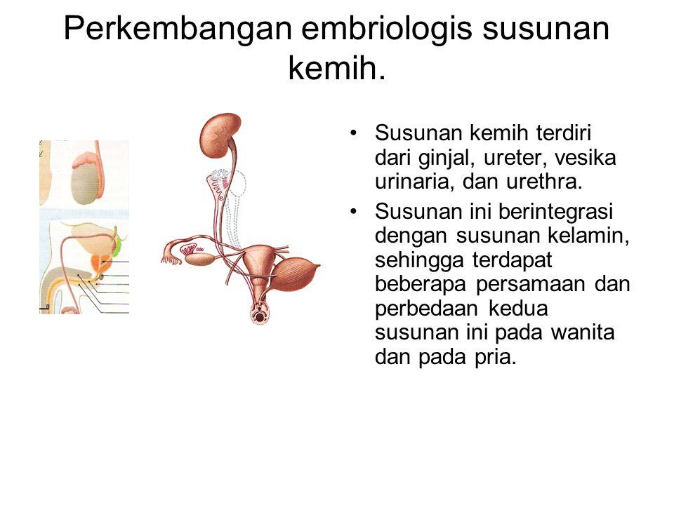 Kloaka dan saluran-saluran sinus urogenitalis.