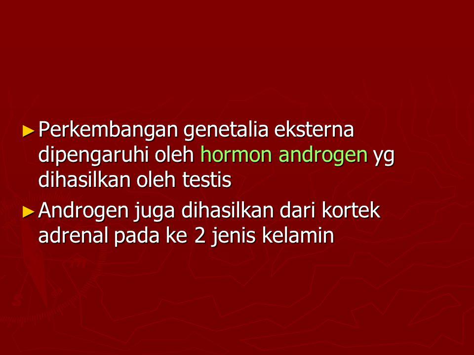 ► Perkembangan genetalia eksterna dipengaruhi oleh hormon androgen yg dihasilkan oleh testis ► Androgen juga dihasilkan dari kortek adrenal pada ke 2