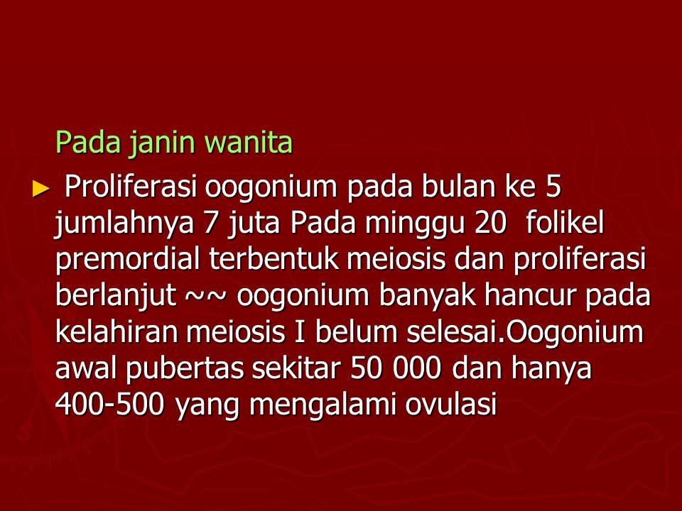 Pada janin wanita ► Proliferasi oogonium pada bulan ke 5 jumlahnya 7 juta Pada minggu 20 folikel premordial terbentuk meiosis dan proliferasi berlanju