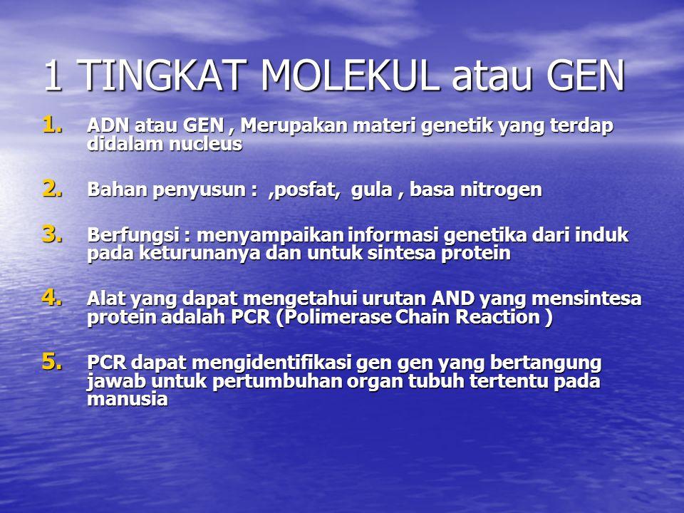 1 TINGKAT MOLEKUL atau GEN 1. ADN atau GEN, Merupakan materi genetik yang terdap didalam nucleus 2. Bahan penyusun :,posfat, gula, basa nitrogen 3. Be