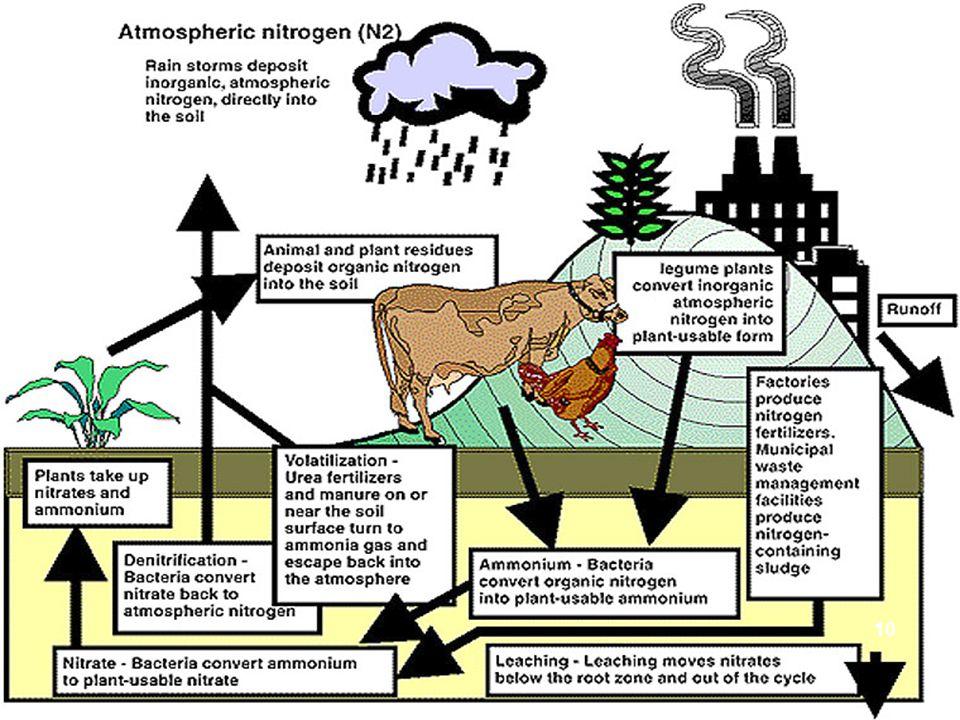 N ITROGEN BEREDAR DI T ANAH -Komposisi N udara: 80% - Nitrogen beredar dalam peredaran : (a). Bakteri dalam tanah akan merubah nitrat menjadi gas ke u