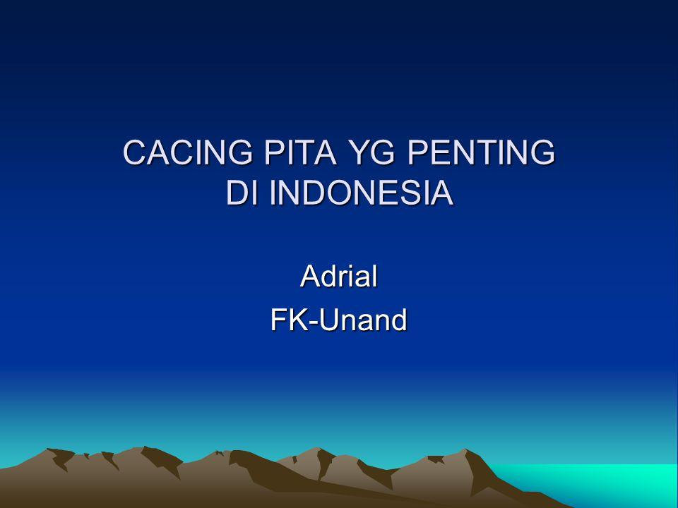Cacing pita yang penting di Indonesia # 1.Taenia saginata 2.