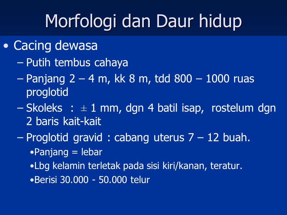 Morfologi dan Daur hidup Cacing dewasa –Putih tembus cahaya –Panjang 2 – 4 m, kk 8 m, tdd 800 – 1000 ruas proglotid –Skoleks : ± 1 mm, dgn 4 batil isap, rostelum dgn 2 baris kait-kait –Proglotid gravid : cabang uterus 7 – 12 buah.