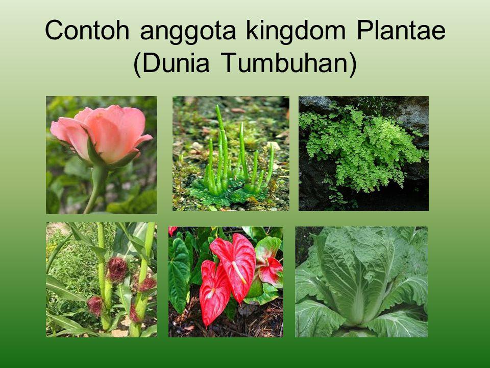 INDIKATOR Mengidentifikasi ciri-ciri umum plantae.