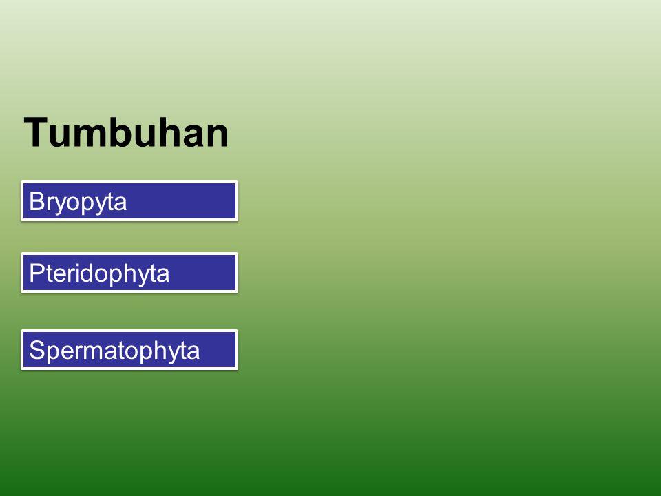 Makrospora (n) Meiosis Sel spora induk (2n) Sporangium (2n) Sel spora induk (2n) Mikrospora (n) Sporofit / Tumbuhan paku (2n) Embrio (2n) DIPLOID (2n) Generasi sporofit HAPLOID (n) Generasi gametofit Mikrogametofit/ mikroprotalium (n) Makrogametofit/ makroprotalium (n) Sel telur (n) Sperma (n) Fertilisasi Zigot (2n) Tumbuhan heterospora menghasilkan 2 jenis spora: megaspora dan mikrospora Tumbuhan heterospora menghasilk an gametofit jantan dan gametofit betina Siklus hidup tumbuhan heterospora Anteredium (n) Arkegonium (n)