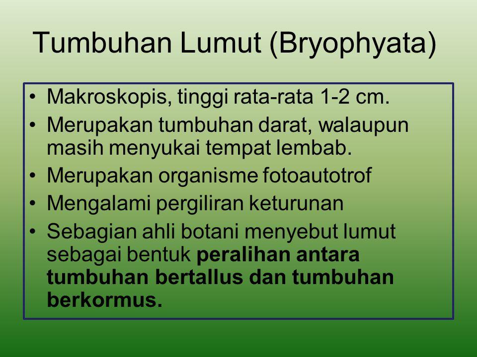 Struktur Lumut Sebagian lumut masih berupa talus, sebagian lagi sudah memiliki akar dan batang namun akarnya berupa rizoid.
