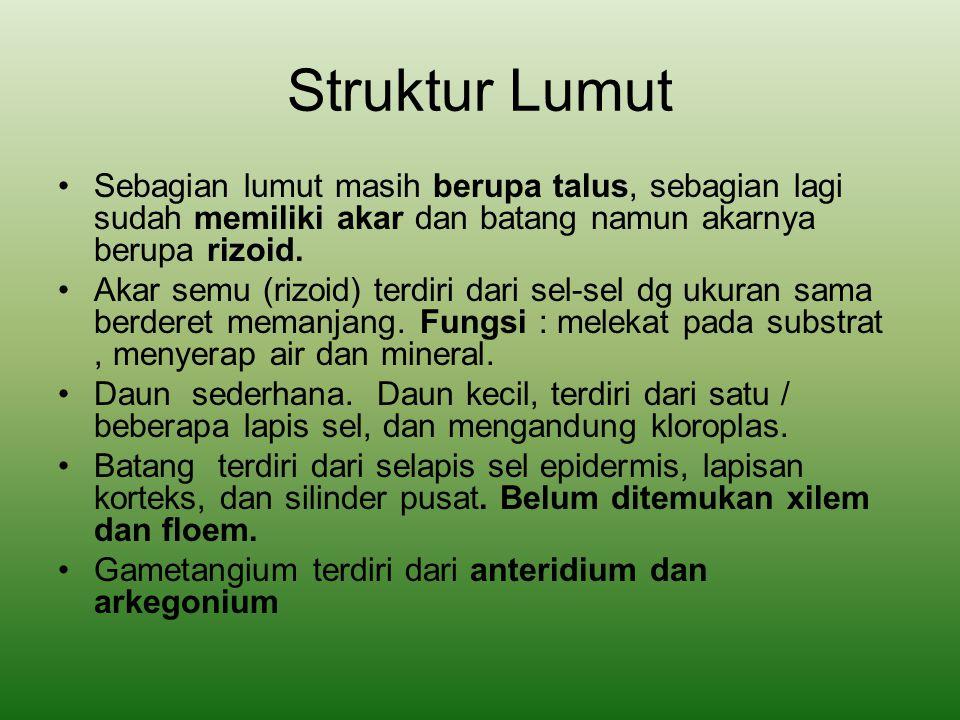 Berdasarkan letak gametangiumnya, lumut dibedakan menjadi:  Lumut berumah satu, bila anteridium dan arkegonium berada pada satu individu.