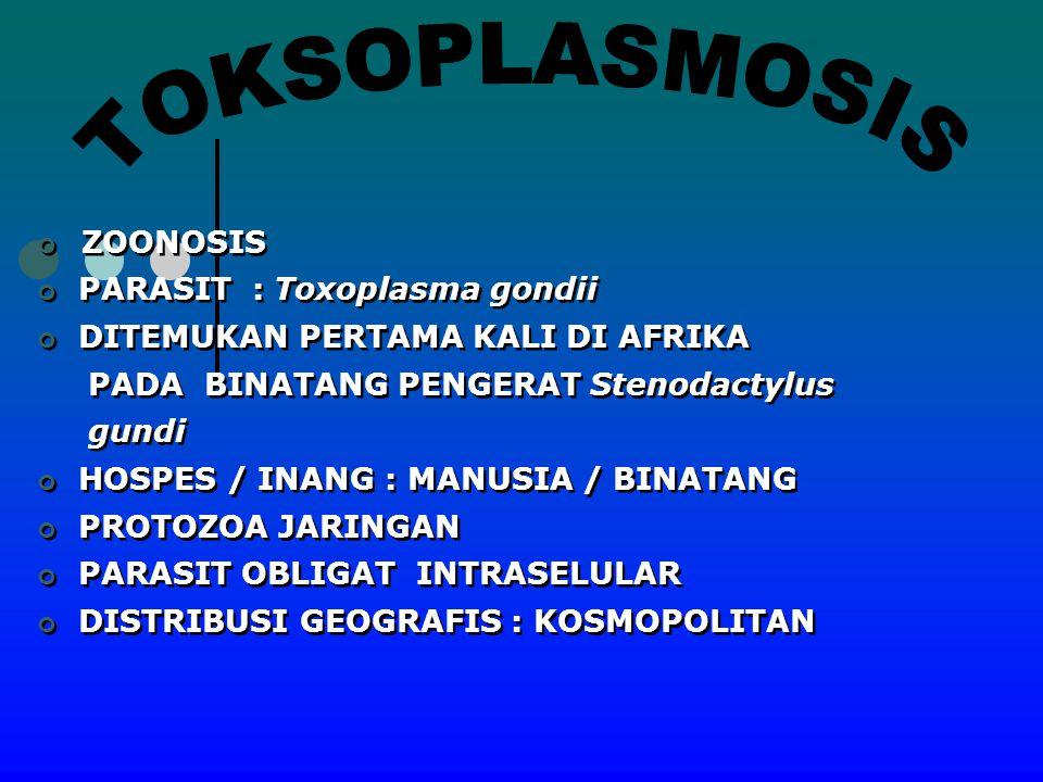 ZOONOSIS PARASIT : Toxoplasma gondii DITEMUKAN PERTAMA KALI DI AFRIKA PADA BINATANG PENGERAT Stenodactylus gundi HOSPES / INANG : MANUSIA / BINATANG P