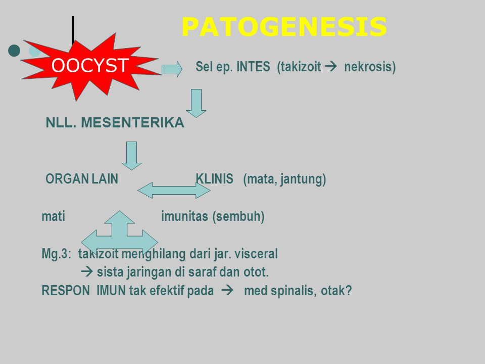 PATOGENESIS Sel ep. INTES (takizoit  nekrosis) NLL. MESENTERIKA ORGAN LAIN KLINIS (mata, jantung) mati imunitas (sembuh) Mg.3: takizoit menghilang da