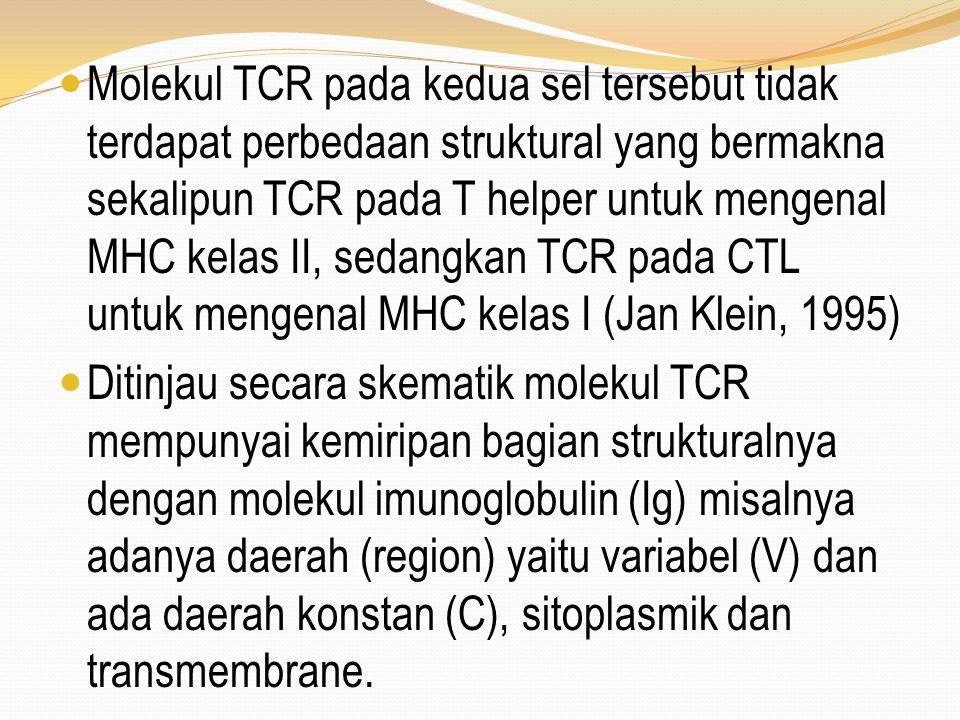 Molekul TCR pada kedua sel tersebut tidak terdapat perbedaan struktural yang bermakna sekalipun TCR pada T helper untuk mengenal MHC kelas II, sedangk