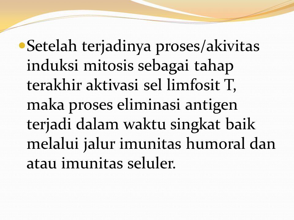 Setelah terjadinya proses/akivitas induksi mitosis sebagai tahap terakhir aktivasi sel limfosit T, maka proses eliminasi antigen terjadi dalam waktu s