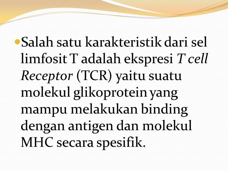 Salah satu karakteristik dari sel limfosit T adalah ekspresi T cell Receptor (TCR) yaitu suatu molekul glikoprotein yang mampu melakukan binding denga