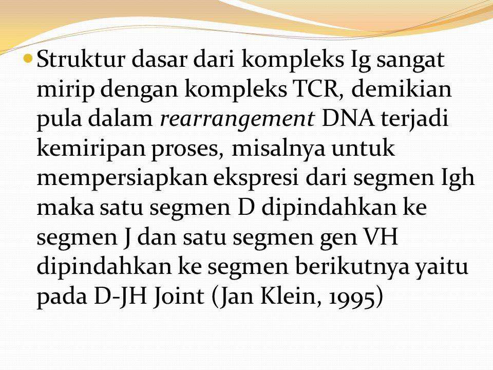 Struktur dasar dari kompleks Ig sangat mirip dengan kompleks TCR, demikian pula dalam rearrangement DNA terjadi kemiripan proses, misalnya untuk mempe