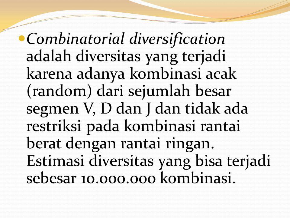 Combinatorial diversification adalah diversitas yang terjadi karena adanya kombinasi acak (random) dari sejumlah besar segmen V, D dan J dan tidak ada